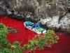 japonya da yap�lan yunus bal��� katliam�