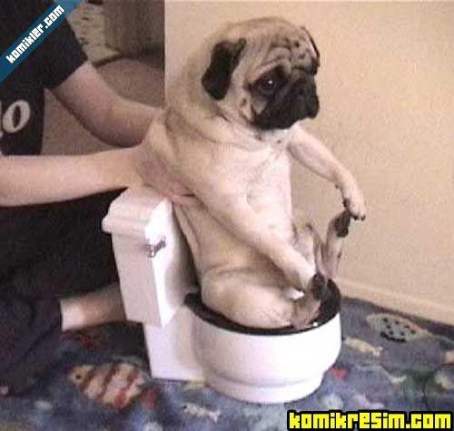 Почему собака не может сходить в туалет по маленькому