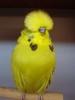 kuşlar hiç üşümez mi sorunsalı