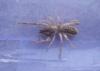 t�rkiye deki en tehlikeli �r�mcek