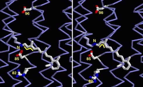 3 d optical memory storage in bacteriorhodopsin (a) photograph of the 3d quantum memory and (b) optical micrograph of a qubit credit: xie et al ©2018 american institute of physics physicists have designed a 3-d quantum memory that addresses.