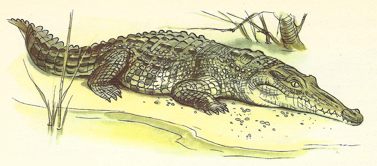 Картинки рисованные с крокодилом