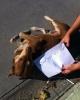 sözlük yazarlarının evcil hayvanları