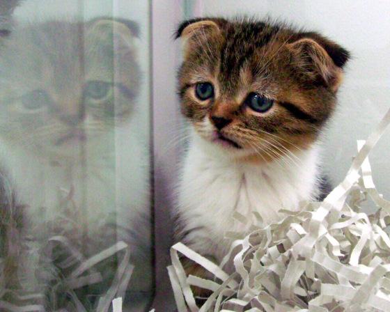gecenin kedisi