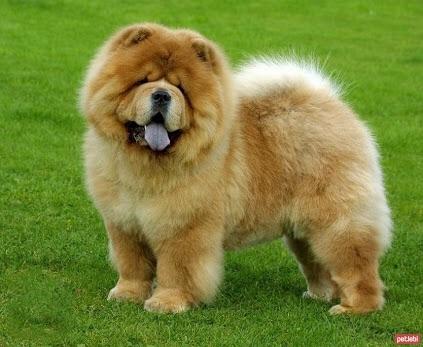 dünyanın en sevimli hayvanı