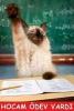 hocam ödev vermiştiniz diyen öğrenci
