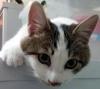 kedi besleyen yazarlar